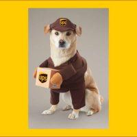 [チェイシング・ファイヤーフライ] ペットコスプレ 854808 UPS ドライバー コスチューム 犬用 【個人輸入代行の商品紹介】